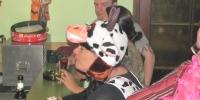 fasnachsparty-im-uvb-heim-2013-030